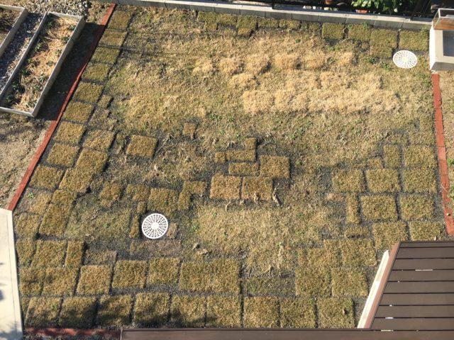月 芝生 2 【芝生の育て方、お手入れ】芝生のある素敵なお庭づくりに挑戦!管理方法までをご紹介!
